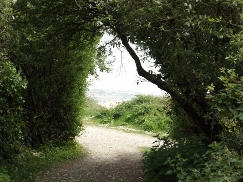 Path from Highcliffe Castle