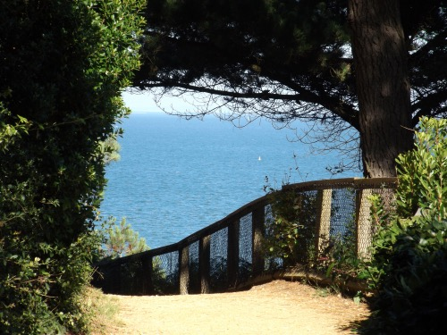 Path down to Branksome Chine